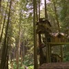 BC's Tallest Treehouse