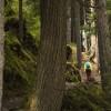 BEAR CREEK FALLS TRAIL