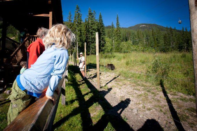 Wildlife Viewing