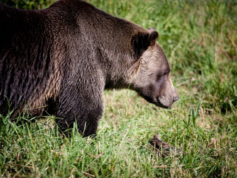 Boo, the bear.